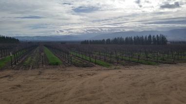 Vineyards in Soledad, CA
