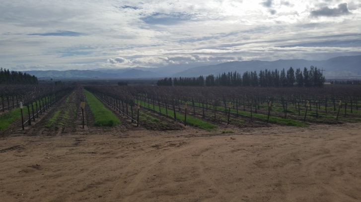 Vineyards in Soledad, CA