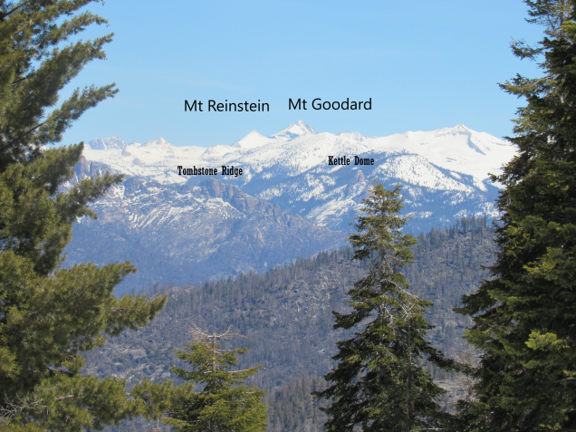 Sequoia labled picture