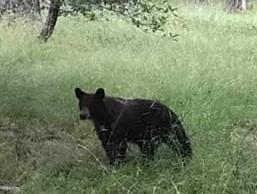 Jr bear 2
